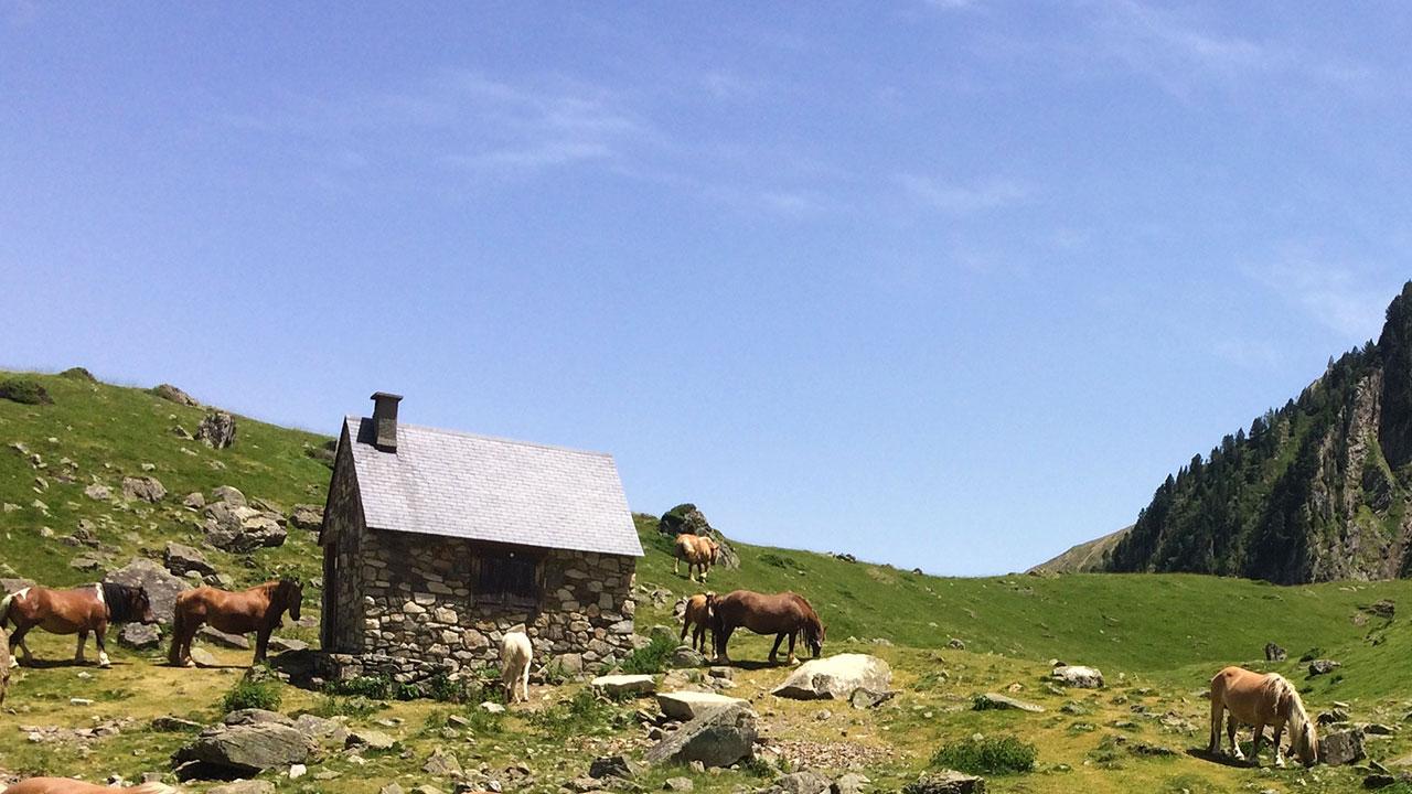 lac d'arou chevaux