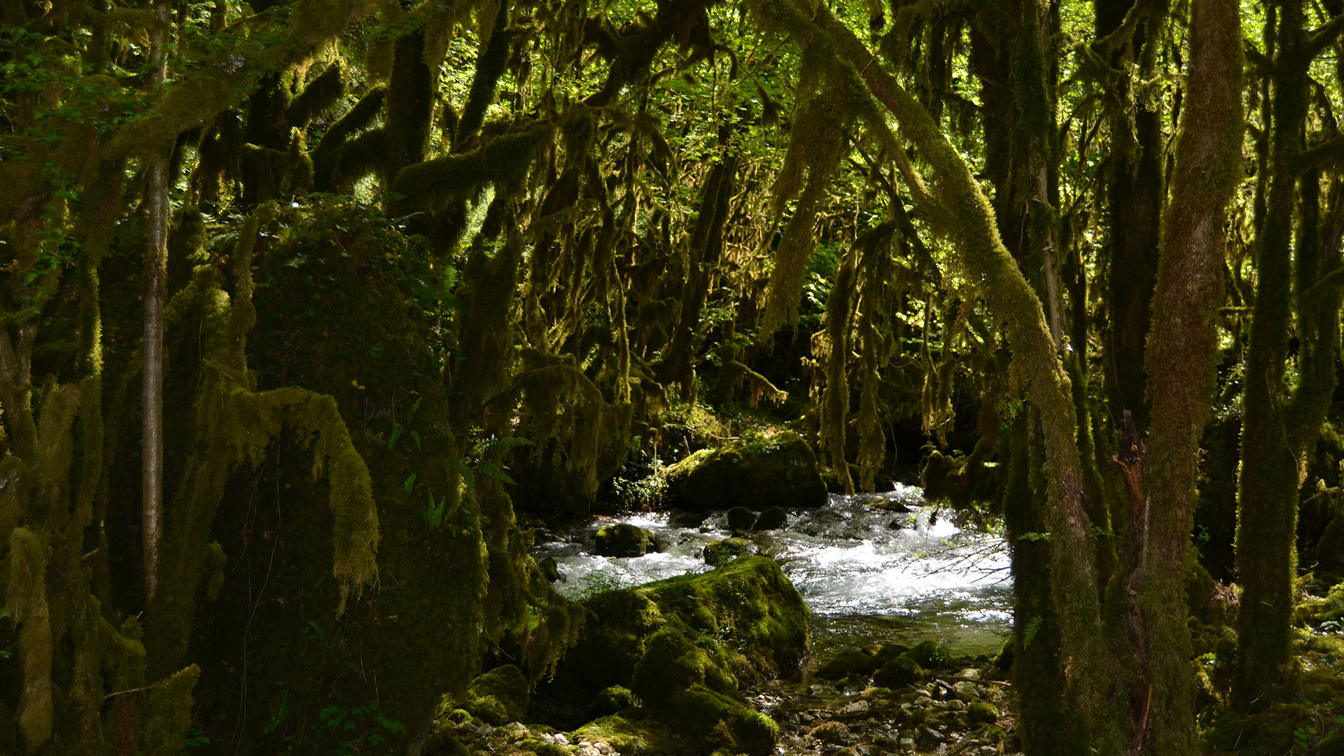 forêt et rivière dans les Baronnies