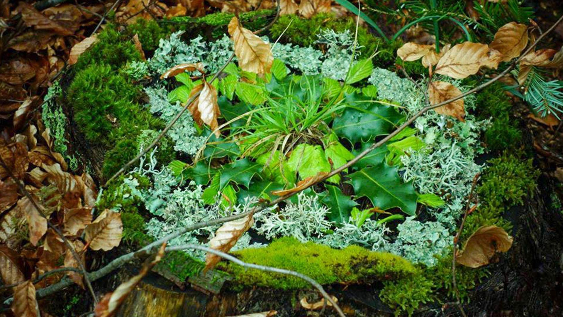 plantes balade de l'émerveillement